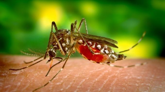 Светски ден за борба против маларија – 25 април